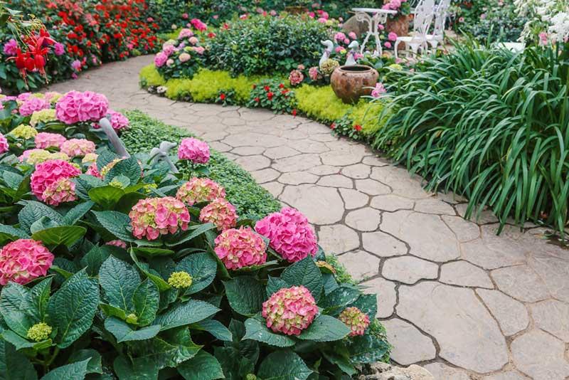As 34 Melhores Plantas De Sombra Que Prosperam Com Facilidade
