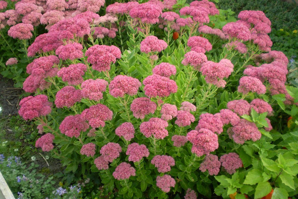 32 Plantas Para Jardim Resistente Ao Sol Flores E Folhagens