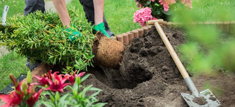 jardinagem para iniciantes